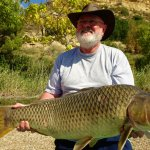A big wild common carp, how big 15 to 17 kg? It was not weighed. Released back to River Ebro.