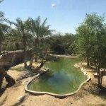 The alligator/Crocodile pond
