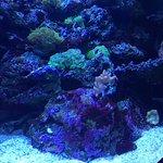 Photo of Coex Aquarium