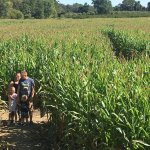 A small portions of the corn maze