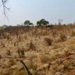 Valokuva: Chobe Elephant Camp