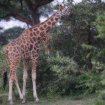 Photo of Murchison Falls National Park