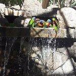 love birds having a bath