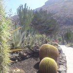 giant cactus and aloe vera