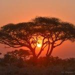 Photo of Tropical Adventure Safaris - Day Tours