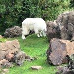 Photo de Oregon Zoo