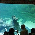 Photo of Sao Paulo Aquarium