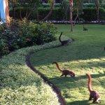 Encore des petits Coati.. à la recherche de nourriture... c'est très bien ça éloigne les bébitte
