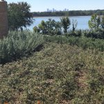 View of downtown Dallas from the Arboretum across Whiterock Lake