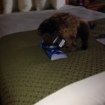 If you have children, be ready for the cute welcoming bison on the bed that you can buy...
