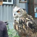 One of the owls up close and personal (with her trainer)