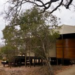 Φωτογραφία: andBeyond Ngala Tented Camp