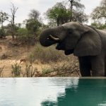 andBeyond Ngala Tented Camp Foto