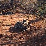 Photo of Madikwe Hills Private Game Lodge