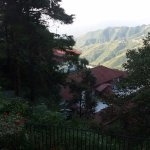 View from the room of the hills laden with dense pine trees