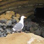 The sea gulls dare to walk along the edge!