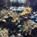 Photo de Gardaland SEA LIFE Aquarium