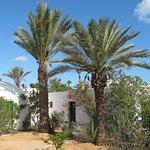 Vue du bungalow jardin