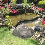 A small pond surrounded by plants.