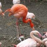 Flamingo beim Ei drehen