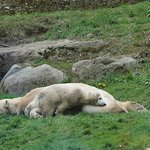 Eisbärkind + Mutter