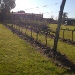 Una mínima parte de los viñedos que se extienden por toda la enorme extensión del terreno.