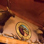 Above the bar, where many Elks are displayed. Most are from friends and family.
