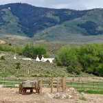 Glamping tents hidden in the Cottonwood trees at 4 Eagle Ranch.