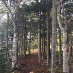 Irving Nature Park Foto
