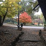 Photo of Parco del Valentino