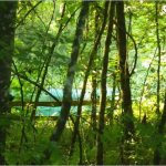 Foto de Ichetucknee Springs State Park