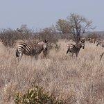Photo of Kruger Flexi Tours - Day Tours