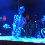 skeleton in the aquarium - nicely decorated for Halloween