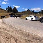 Custer State Park Traffic Jam