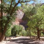 Zion's Main Canyon Foto