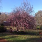 Jalbrook Estate Gardens