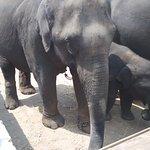 Dubare Elephant enclosure
