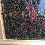 Billede af Clifford's Honey Farm