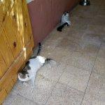 Foto de ACE- Animal Care in Egypt