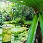 Botanical Gardens (Botanisk Hage og Museum) Foto