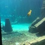 Photo de Atlantis, Royal Towers, Autograph Collection