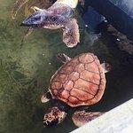 Kosgoda Sea Turtle Conservation Project Foto