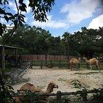 Photo of Taipei Zoo