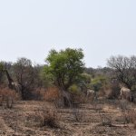 Photo of Ukutula Lion Park