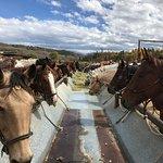 Foto de C Lazy U Ranch