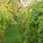 Фотография Sharpe Hill Vineyard