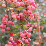 Autumn colours at the RSPB garden
