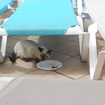 cats at the pool area