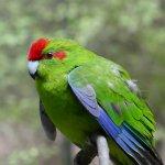 Foto de Rainbow Springs Nature Park