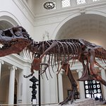 Sue - The world's largest, most complete, and best preserved Tyrannosaurus rex